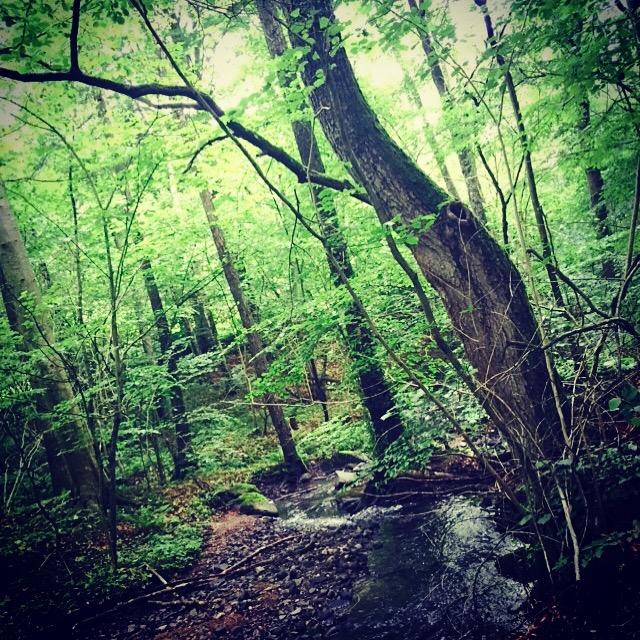 Mix träning i utomhusgym och skog